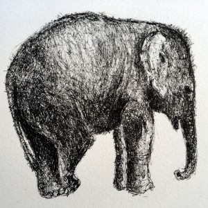 Relaxed elephant, litho, Harriet Brigdale, Artist