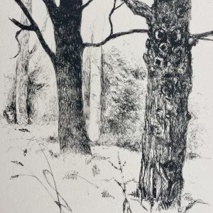Dark tree, litho, Harriet Brigdale, Artist