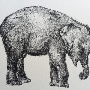 Tiny elephant, litho, Harriet Brigdale, Artist